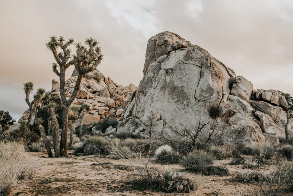 joshua tree samples-1